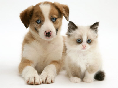 Puppies on How To Take Care Of Your Dog   Just Another Edublogs Org Weblog